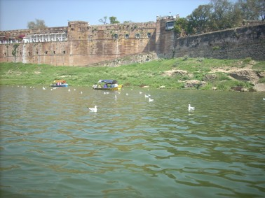Gulls in front of the Fort